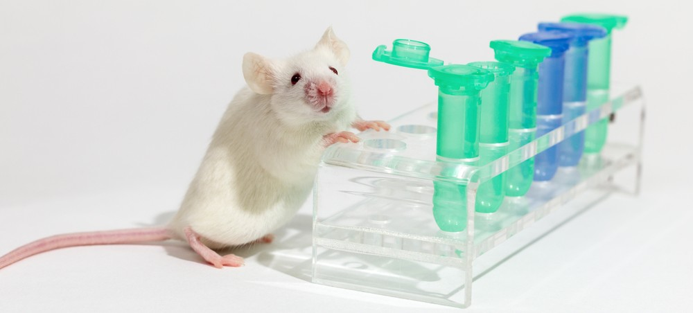 Type 1 Diabetes May Be Inhibited By a New Compound, Study on Mice Shows