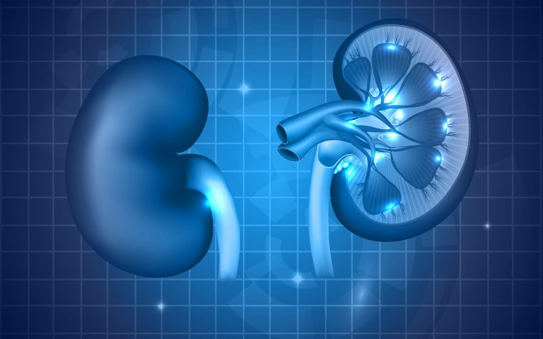Chronic Kidney Disease Can Cause Diabetes, Study Finds